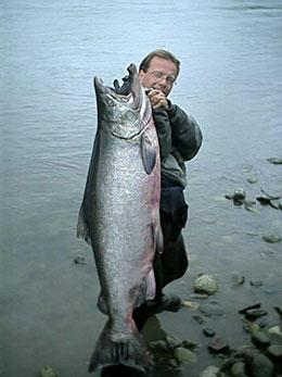 Although this is not a Kalum River Chinook it is one heck of a BIG FISH landed on the Skeena River near Terrace.