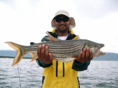 3.2Kg (7lb) Tiger Fish caught on a Surface Lure