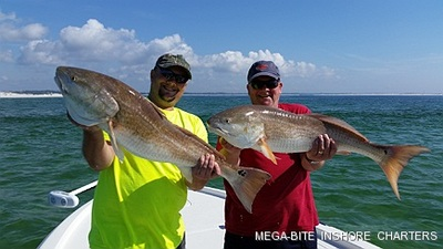 Big Redfish can be caught on the shallows off the surf in March