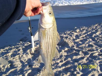 Short Stripers like this all day