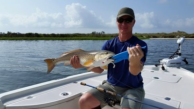 Redfish on the flats