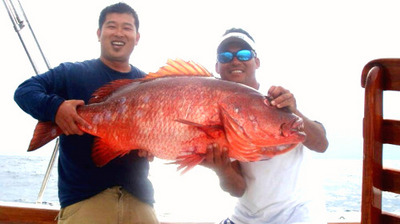 Cuberra Snapper or Dog Tooth Pargo, a rose by ....