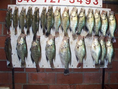 At what temperature does Crappies and Bluegills spawn? | I Love