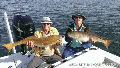 Two gollden reds