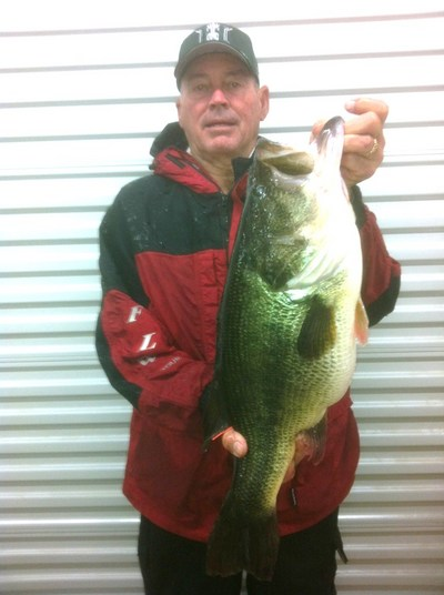 This 11.2 lb toledo largemouth hit a spinnerbait