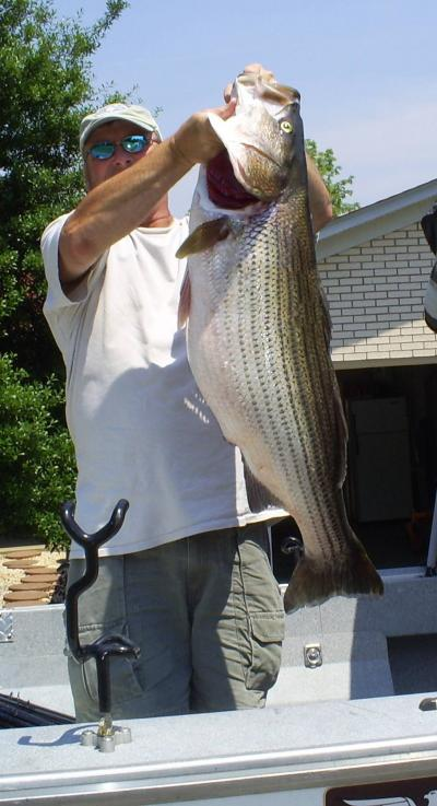 Trophy stripers on lake cumberland for Kentucky fishing license cost