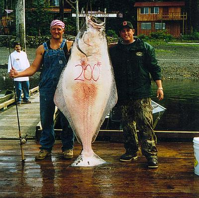 200 lb Halibut 12lb test Spider Wire