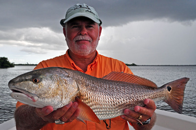 Fat Matlacha Pass Redfish