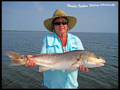 Nice Mosquito Lagoon Redfish by Rebecca on a crab