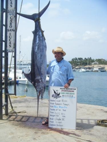 Blue marlin season in cabo san lucas for Cabo san lucas fishing season