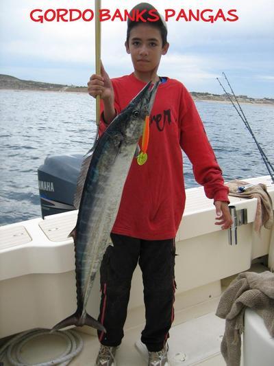 San jose del cabo fish report for San jose del cabo fishing report
