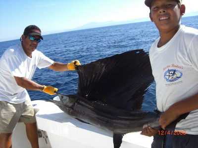 sailfish 12/4/08