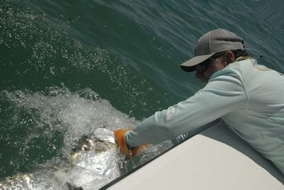 Capt. Rick Grassett with a tarpon caught and released on a fly by Sean Sherman, from NYC, in the coastal gulf in Sarasota.