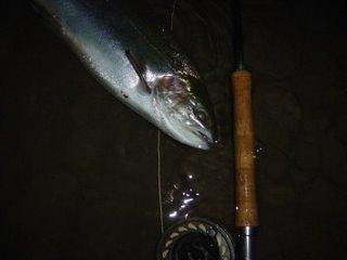 Streamer fishing at night in the mouth of Walnut