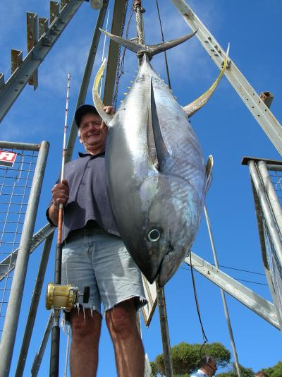 Yellowfin Tuna like this one are a prize catch at Bermagui. D J\'s Fishing Adventures could put you onto fish like this one.