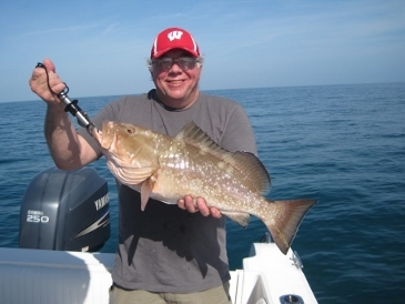 26-inch red grouper, on baitfish, 20 miles west of New Pass, Bonita Beach, SWFL