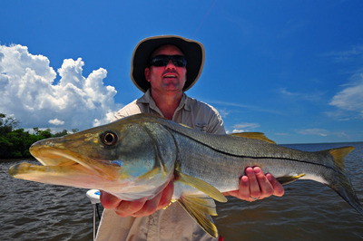 Snook- caught and released in Charlotte Harbor