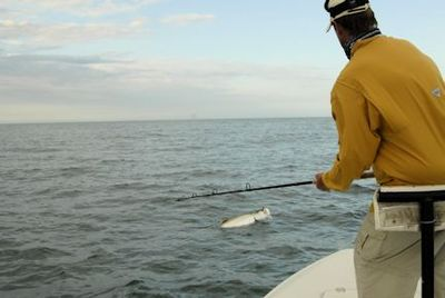 Hal Lutz, from Parrish, FL, battles a tarpon to the boat while fishing with Capt. Rick Grassett.