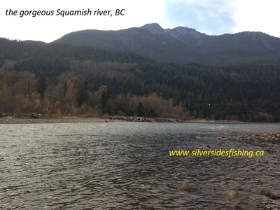 Squamish river flyfishing for salmon is a real treat