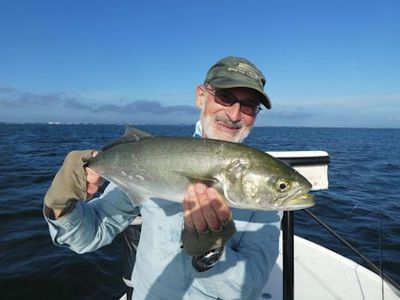 Steve Cohn, from Australia, with a nice bluefish caught and released on a fly while fishing Sarasota Bay with Capt. Rick Grassett.