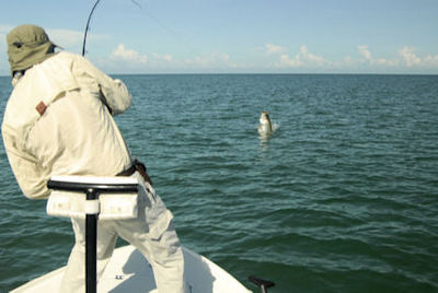 Jay Peck's Sarasota fly tarpon caught and released with Capt. Rick Grassett.