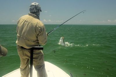 Jay Peck, from Rochester, NY, jumps a tarpon on fly tackle in the coastal gulf in Sarasota while fishing with Capt. Rick Grassett.
