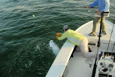 Capt. Rick Grassett lands a tarpon caught and released by Jum Dempsey, from IL, while fishing the coastal gulf in Sarasota.