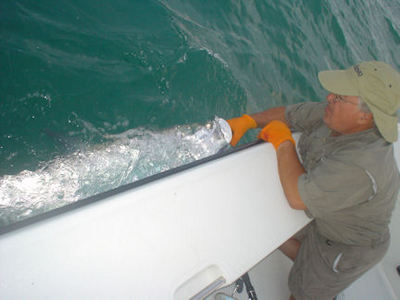 Jim Festa's Siesta Key tarpon caught & released while fishing with Capt. Rick Grassett.
