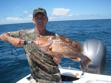 26-inch red grouper on a bait-fish
