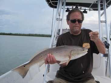27 1/2-inch bull red on pinfish, released