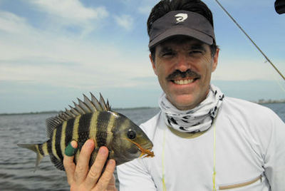 Mark Torkos Sarasota Bay fly sheepshead caught with Capt. Rick Grassett