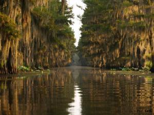 Caddo lake texas side fishing report for Caddo lake fishing report