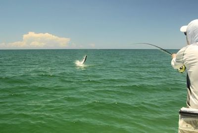 Rusty Chinnis, from Longboat Key, FL, jumps a tarpon on a fly while fishing in Sarasota with Capt. Rick Grassett.
