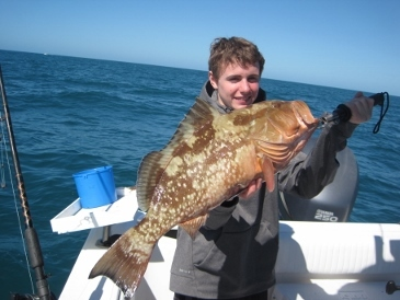 25-inch red grouper on squid