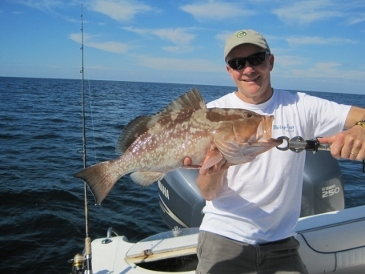 25-inch red grouper, on live shrimp, released 36 miles offshore 10-30-14