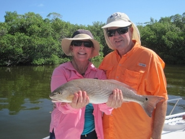 24-inch redfish on shrimp in Estero Bay