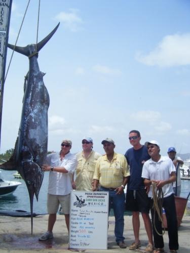 Blue marlin season in cabo san lucas for Cabo fishing seasons