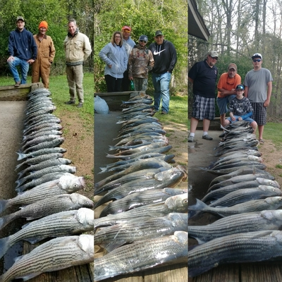 Clarks hill fishing with Little River Guide Service
