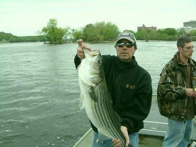 Delaware river stripers for Delaware river striper fishing
