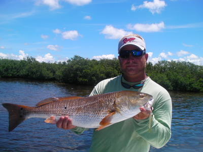 Redfish attractant Pro Cure