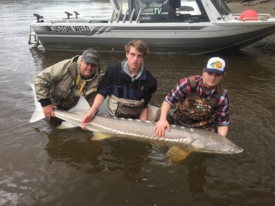 7 foot Fraser river Sturgeon caught late March