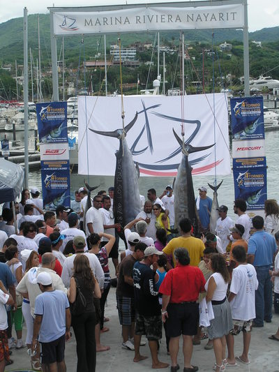 marlin/tuna puerto vallarta