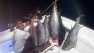 Yellowfin Tuna's