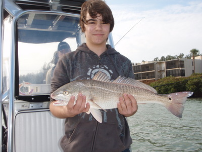 Redfish in Tampa Bay!